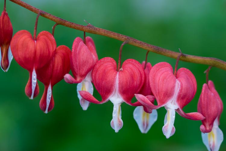 Harrogate spring flower show show information tickets for the 2018 harrogate spring flower mightylinksfo