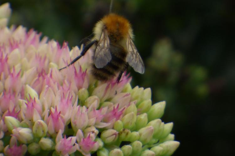 Planting for Bees - The Little Honey Bee Company
