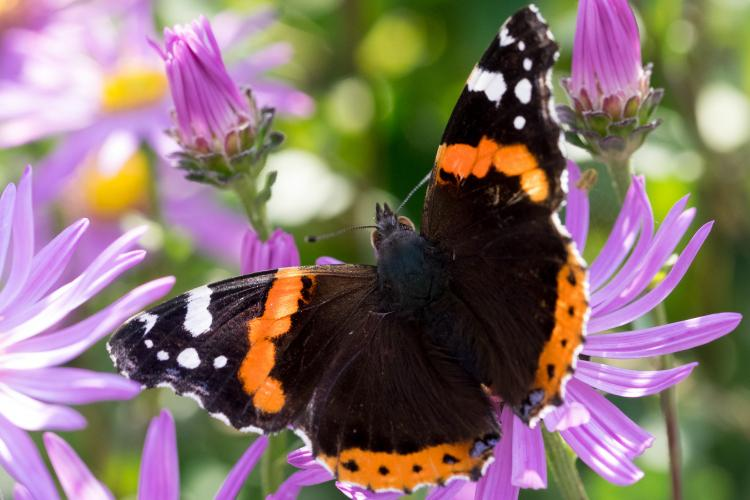 Hardy's Quick Guide to Butterfly-friendly Gardening
