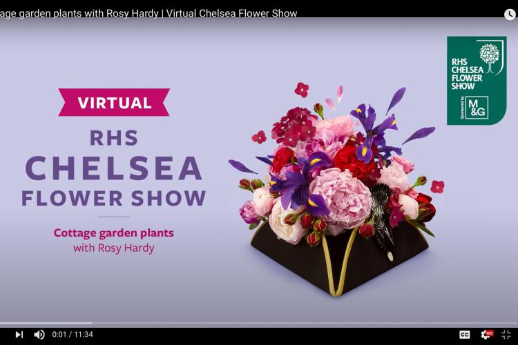 Cottage garden plants with Rosy Hardy | Virtual Chelsea Flower Show