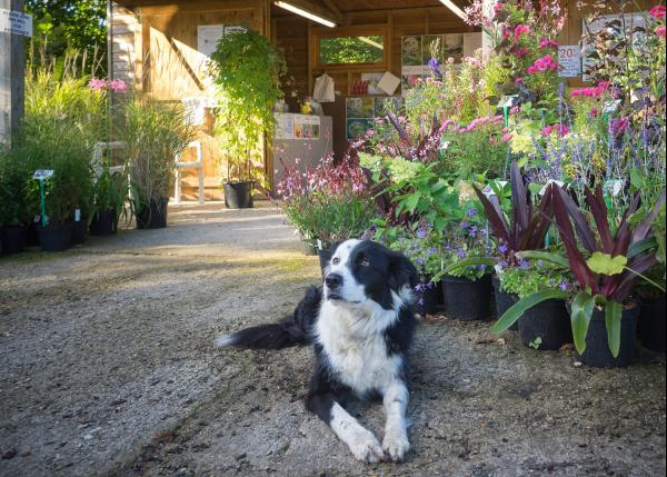 Dogs are welcome at the nursery